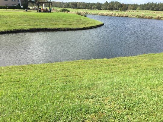 Improper lakeside mowing allows no filtering for runoff.