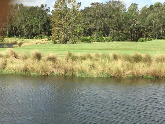 Grasses around the water provide filtering.
