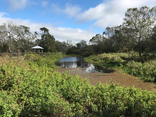 Scenes from hiking D.J. Wilcox Preserve in St. Lucie County.
