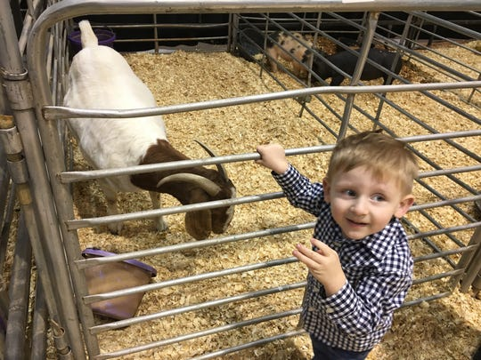 Holden Snell ,2, of Haile, LA enjoys the baby goat exhibit at the AG Expo at the IKE in West Monroe on Friday afternoon.