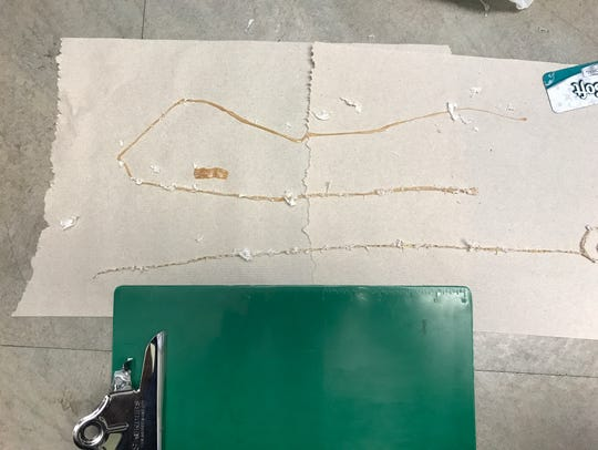A man pulled this five-and-a-half foot tapeworm from