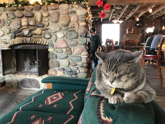 Fletcher Pickles the cat sits inside Hotel Tango distillery