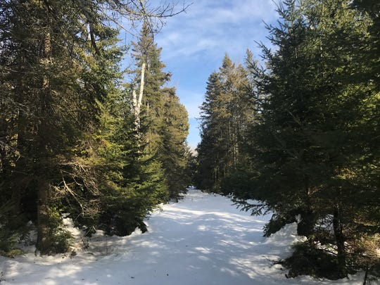 Baileys Harbor boreal forest purchased by The Nature Conservancy Friday, Feb. 2, 2018.