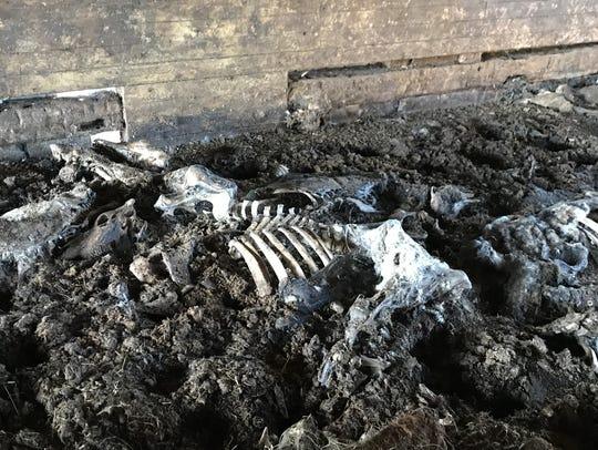 Dozens of carcasses were seen Sept. 29, 2017 among