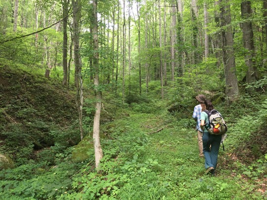 The SAHC land trust worked with private landowners to protect 88 acres in Boyd Cove in the Newfound Mountains of Sandy Mush.