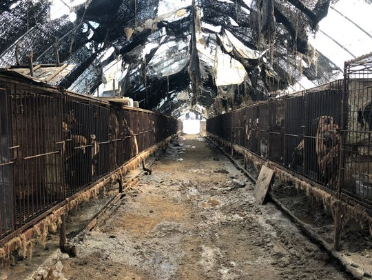 Two rows of cages that contain dogs that will be used