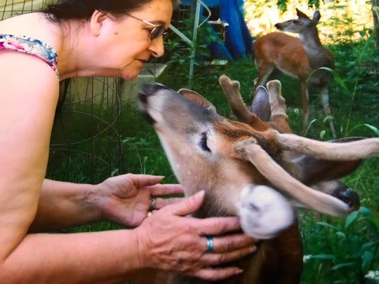 Wildlife rehabilitator Mary Weiss, along with her husband, Ed, have brought back to health and released about 90 deer over the years.