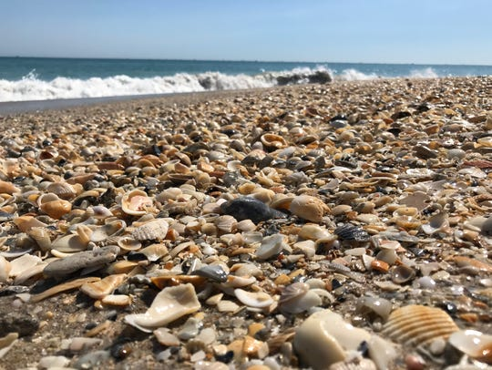 Shells cover the shoreline of the secluded beach at