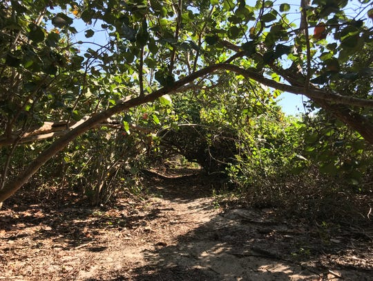 A mangrove tunnel leads to a secluded beach at St.