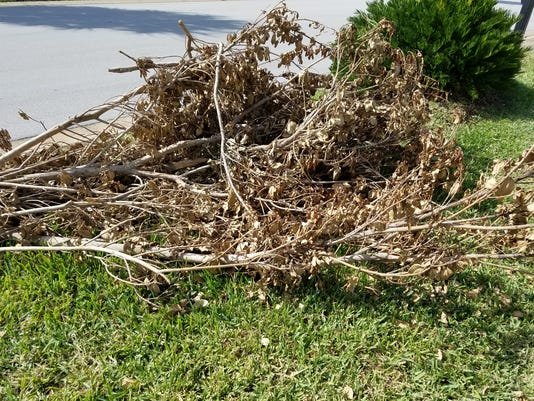 636558563546602925-Yard-debris.jpg