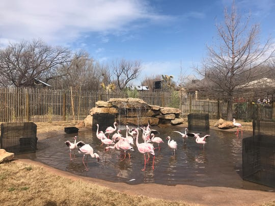 The new Nakuru Lagoon with flamingos and African ducks opened at the Abilene Zoo in March 2018.