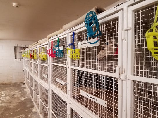Image from the Melbourne Greyhound Park kennel