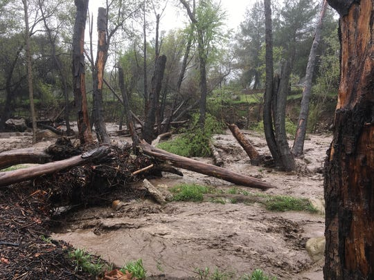 Santa Ana Creek rushed into Lake Casitas during Thursday's