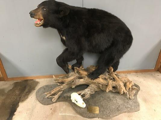 636583607541421517-Black-bear-donated-by-Jim-Eis.jpeg