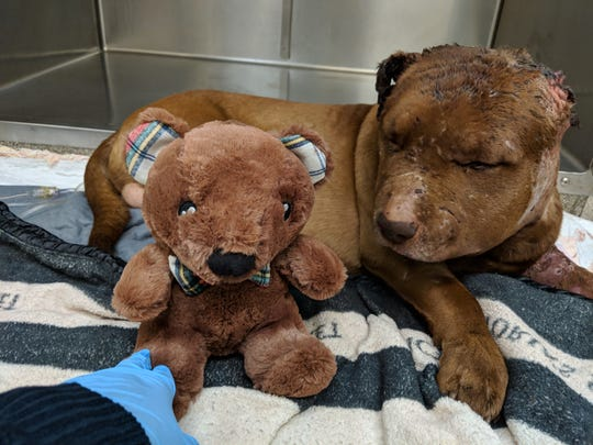 Legend at the animal hospital after the attack