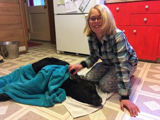 Abby Hutton, 11, saves a newborn calf with warm milk,