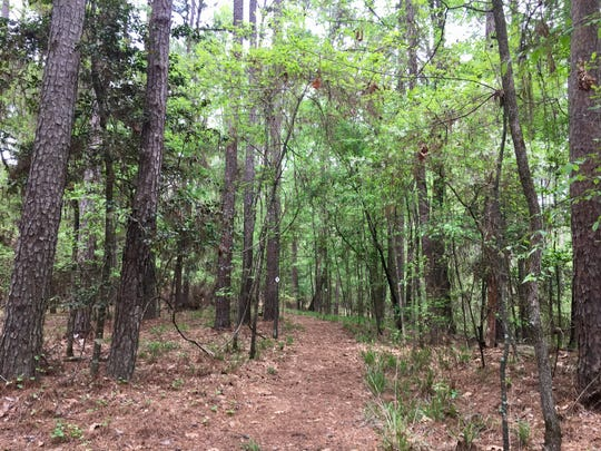 Lake D'Arbonne State Park has six miles of hiking and biking trails.