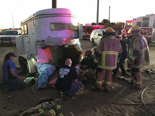 Phoenix Fire Department free horse from trailer