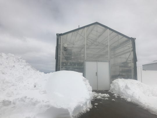 Maintenance crews dug a path to the greenhouse at Lena High School which escaped harm during snowstorm Evelyn which dumped 30 inches of heavy snow in the area.
