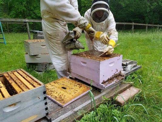 636596598748369139-bees1.jpg