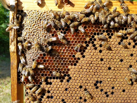 Heroes to Hives is a free 9-month program that teaches