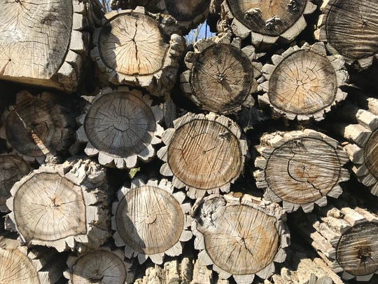 Oak trees are plentiful on the Black Button farm in Bristol. These stacked logs were left behind by a previous owner.
