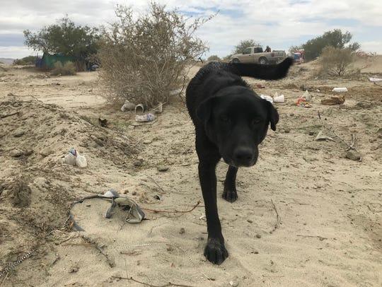 Sasha walks around the homeless encampment weeks prior