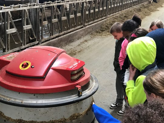 Students watch as a Lely robot pushes up the feed in