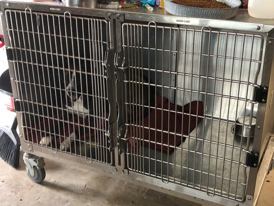 Kennel being used at Pets Without Parents, Sevier County's intake center.