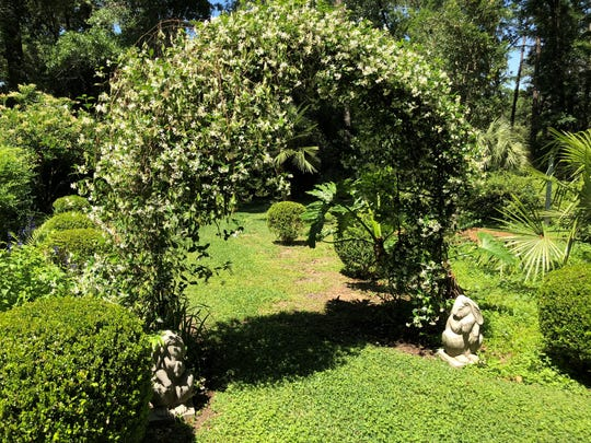 Confederate jasmine adds fragrance to the garden archway.