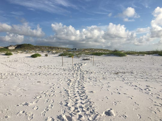 Biologists located the first sea turtle nest of the 2018 season early Wednesday morning.