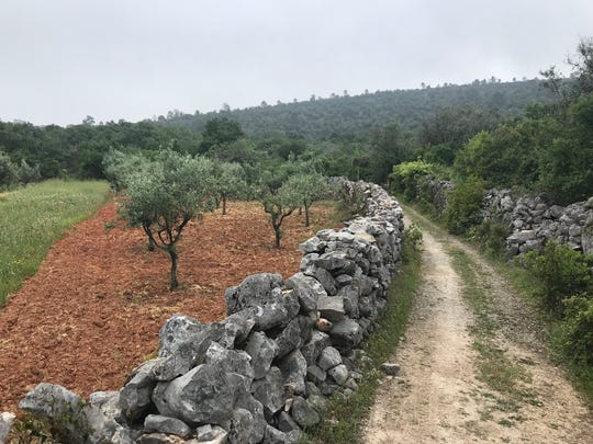A path along the way to Santiago in Portugal.