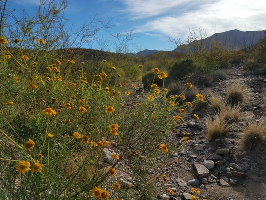 The Lost Dog trail in the Franklin Mountains State Park