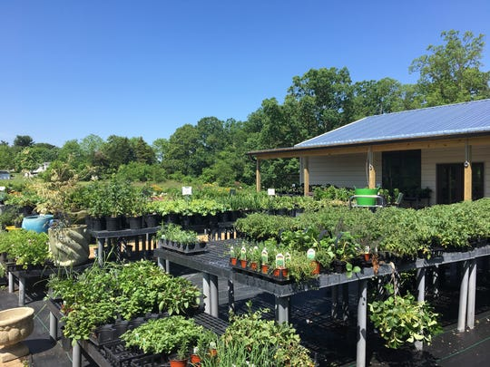 JMD Farm Market and Garden Center has relocated to a new spot near JMD Farm in Barren Ridge outside of Staunton. Previously, the farm market and garden center was located on Parkersburg Turnpike right outside of Staunton. Now, with the new space will come more plants, events and local food and products.