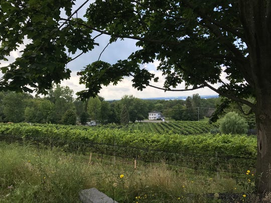 A view of the vineyard at Heart and Hands Wine Company in August 2017.