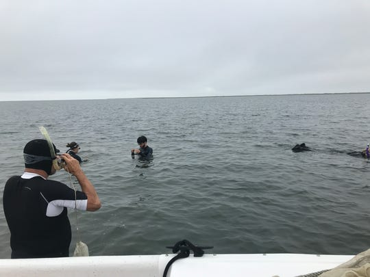 Volunteers dip and dunk in the shallow waters of South Bay, where for the past decade they have helped collect seeds for the world's largest seagrass restoration project. Their efforts have helped cultivated nearly 7,200 acres of underwater meadows from the southern tip of South Bay north to Hog Island.