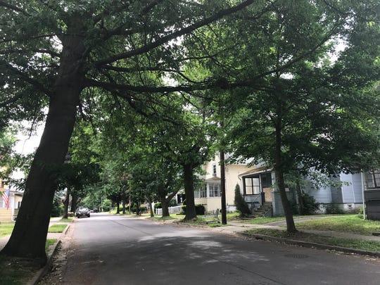Shade trees along Lydia St. in Binghamton