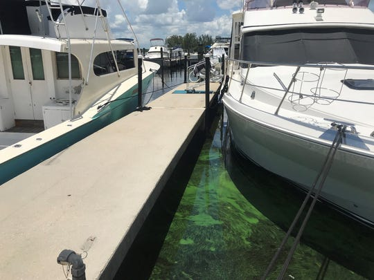 Boats float in algae-slicked waters in the downtown