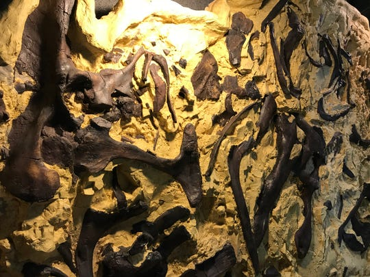"""Bob the Blob"" is a mass of intertwined dinosaurs on display at the Two Medicine Dinosaur Center in Bynum."