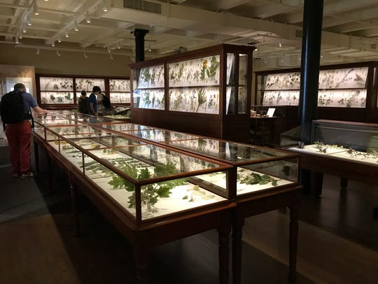The Ware Collection of glass flowers at the Peabody Museum includes highly detailed models of plants made by Czech glassworkers.