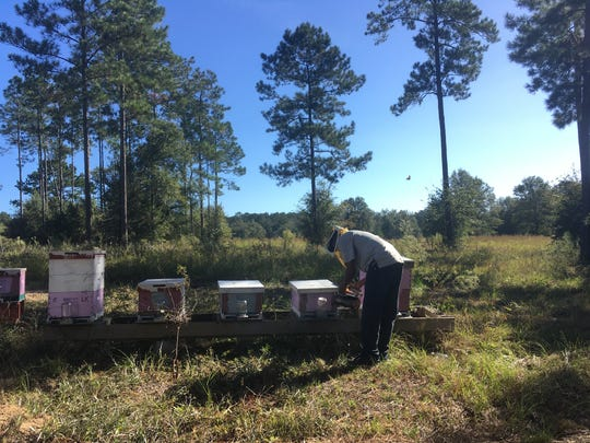 Worrel Diedrick, with veil and smoker, working on beehives in Quincy, Florida. Photo by Ben Hottel.