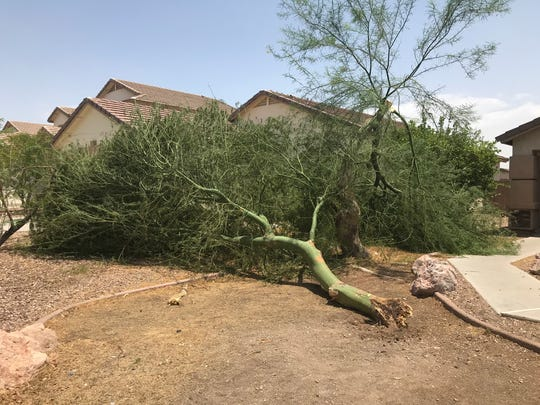 The strong winds and rain from the night of July 8, 2018, uprooted a tree in Annabelle Cruz's front yard.