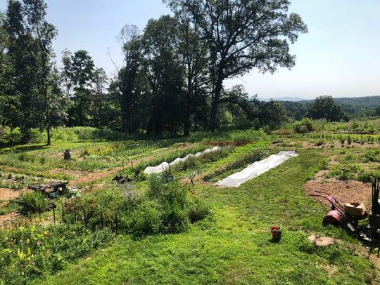 Laura Beth Dawson's Tiny Fields Farms in Churchville