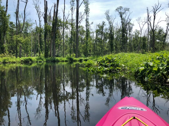 The peaceful waters of the Great Swamp in Patterson are lined with rich foliage and tree tops.