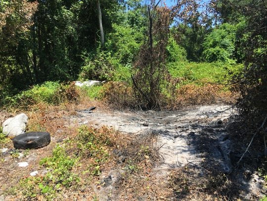 A charred patch of woods where a homicide victim was