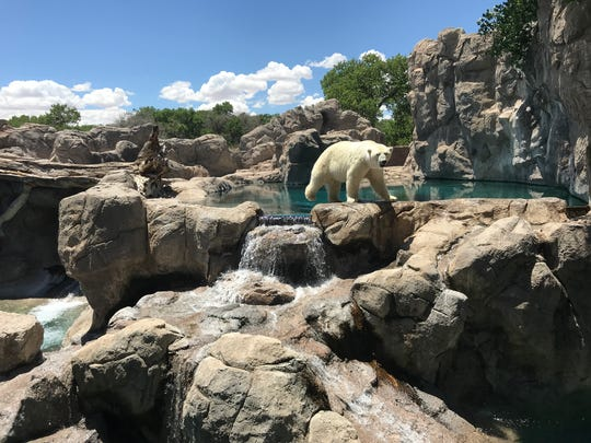 The Albuquerque Zoo has a polar bear, which thrills