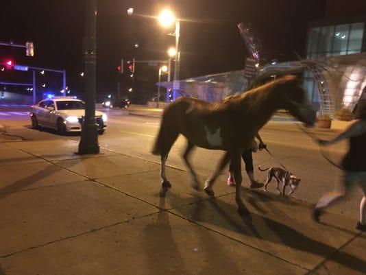 636677237124897415-horse-downtown-memphis.jpg