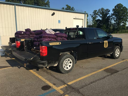 Michigan DNR conservation officers seized more than 2,000 pounds of live, illegal red swamp crawfish in 55 bags – the largest aquatic invasive species seizure by the DNR.