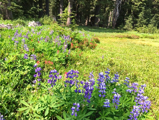 Wildflower fields are dotted with red paintbrush and blue lupine.