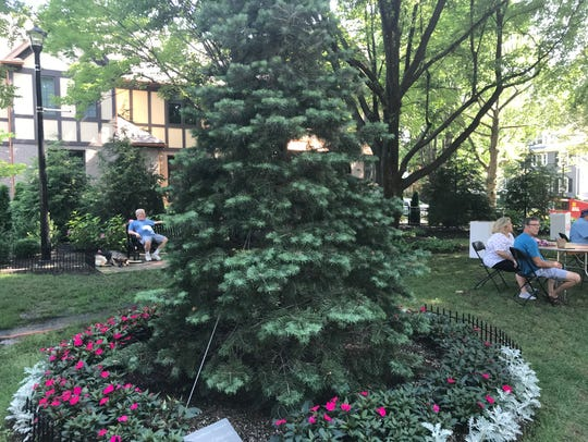 A tree planted in honor of the late Jimmy Catalano,